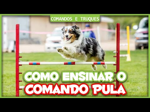 Video COMO ADESTRAR MEU CACHORRO - SALTOS DE AGILITY download in MP3, 3GP, MP4, WEBM, AVI, FLV January 2017