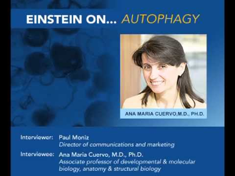 Einstein On: Autophagie, Dr. Ana Maria Cuervo