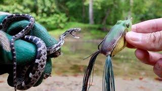 Video LIVE BAIT vs. ARTIFICIAL LURES -- FISHING EXPERIMENT!!! (Snake vs. Frog vs. Worm) MP3, 3GP, MP4, WEBM, AVI, FLV Oktober 2017
