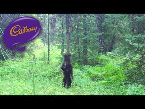 Cadbury Commercial for Cadbury Dairy Milk (2016) (Television Commercial)