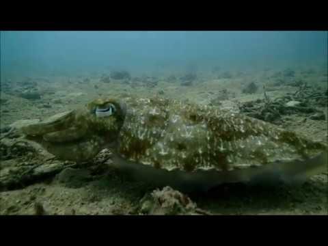 60 seconds update of Kata Reef