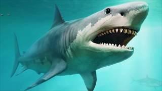Video 5 Lawan Mematikan Monster Megalodon MP3, 3GP, MP4, WEBM, AVI, FLV Februari 2019