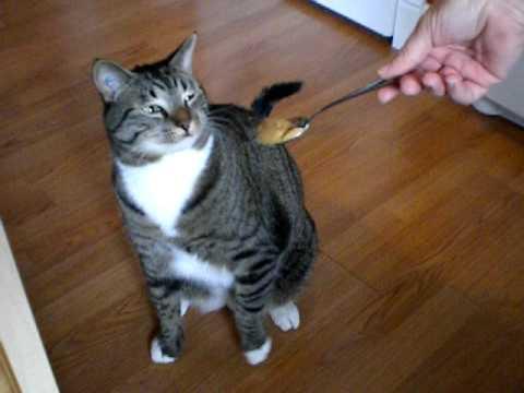 Boots the gaggin cat.AVI