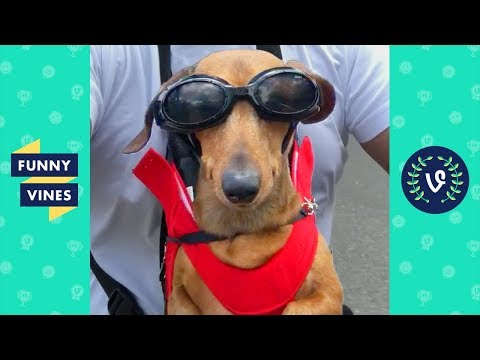[20 MIN] Ultimate CUTE PETS & FUNNY ANIMALS Compilation  Funny Vines August 2018