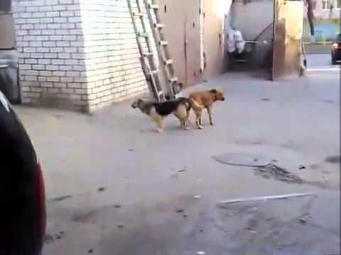 Отпугиватель для собак видео