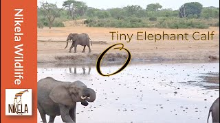 Video Did the herd reject this baby elephant? MP3, 3GP, MP4, WEBM, AVI, FLV Desember 2018