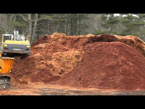 Grinding Hemlock Mulch