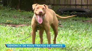 Itu: denúncia de maus tratos de animais