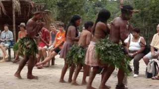 Download Lagu dansul ploii in jungla amazoniana Mp3