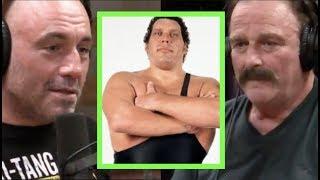 Video Joe Rogan - Jake The Snake on Andre the Giant MP3, 3GP, MP4, WEBM, AVI, FLV Juli 2019