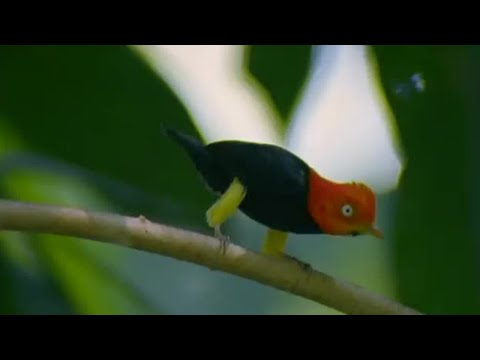 Glamorous Birds in the Animal World – BBC