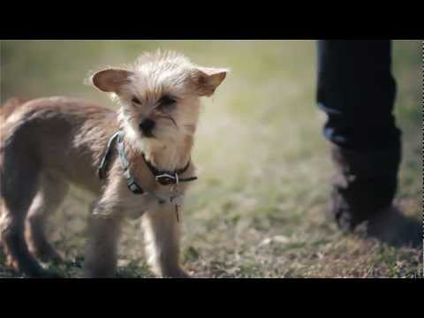 Chihuahua-Terrier Puppy Stands Out in a Crowd | The Daily Puppy