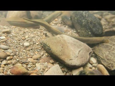 العرب اليوم - اكتشاف أسماك