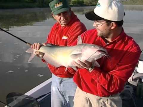 North American FishingClub: Monster Catfish Part 5 Channel Catfish