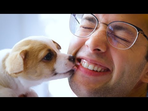 Cat Lovers Try Dog Grooming | The Try Guys
