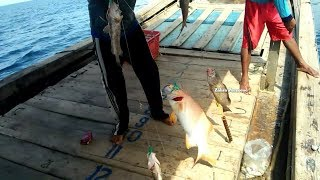Video Hattrick Dapat Ikan Kerapu Termahal || mancing ikan laut MP3, 3GP, MP4, WEBM, AVI, FLV Mei 2019
