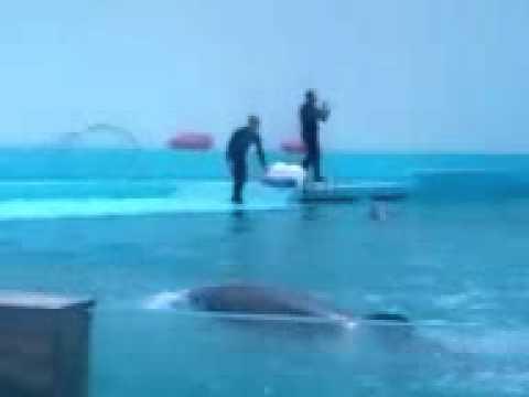 Show de delfines- Feria de chapultepec