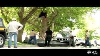 Как медведя снимали с дерева
