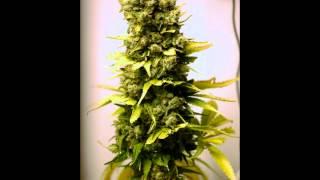 Mista Grimm- Indo Smoke (Ft. Warren G & Nate Dogg)