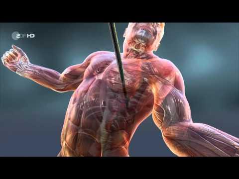 Neandertaler: Die Apokalypse der Neandertaler - DOKU HD