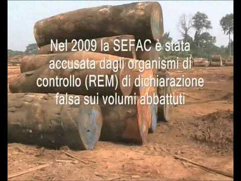 WWF Italy get funds from African deforestation carried by Vasto Legno