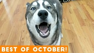 Video Ultimate Animal Reactions & Bloopers of October 2018 | Funny Pet Videos MP3, 3GP, MP4, WEBM, AVI, FLV Januari 2019