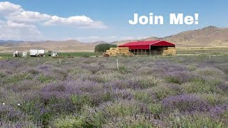 YOUNG LIVING ESSENTIAL OILS Lavender Farm In UtahRic & Melody believe in LIVING FREE FOREVER. We aim for a minimalist & simple lifestyle, so we can feel free to do what matters most to us...spending time with our family, traveling & just enjoying life.  We hope to inspire others to follow their dreams and goals as well.Subscribe To Noah's Channel: TikTakFrog https://www.youtube.com/channel/UCj26xbO4QyY_05K4W3vDbcQNoah's Instagram: https://www.instagram.com/tiktakfrog/ Willow's Instragram: https://www.instagram.com/ruthberry207/Thank you for supporting our channel by shopping on our Amazon affiliate store http://amzn.to/1ZNfFjv   *****************************************LOVE this credit card for travel! Earn 50,000 bonus points with Chase Sapphire Preferred.  Learn more. https://applynow.chase.com/FlexAppWeb/renderApp.do?SPID=FNLC&CELL=63HD&MSC=1543018559 #ad*****************************************************************LEARN ANYTIME ANYWHERE - FREE 30 Day Trial! http://www.tkqlhce.com/click-8093518-12177384*Learn new business, creative, & tech skills with expert-led online video tutorials************************************************************AWESOME Travel Sites!$40 off your 1st trip stay! Travel with Airbnb 1 million+ places to stay around the world or rent your home & earn http://www.airbnb.com/c/melodys449  Home Stay - Great Value In Over 150 Countries!http://www.jdoqocy.com/click-8093518-12353257FREE Flight Comparison With Skyscanner http://www.kqzyfj.com/click-8093518-12532519  Find Yelp Deals In Your Area http://www.anrdoezrs.net/click-8093518-10867459  WORLD NOMADS TRAVEL INSURANCE Click here to get a free quote http://goo.gl/W055p1   Join AAA auto travel club to save on travel! http://autoclubsouth.aaa.com/refer/?ref=3007956552  I've been a member for over 33 years! EURail Select Pass http://www.dpbolvw.net/click-8093518-11726308 ************************************************BE PREPARED FOR ANY EMERGENCY OR DISASTERHoneyville Emergency Preparedness 