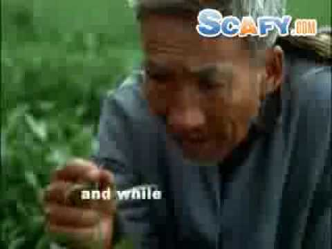scafy - http://www.scafy.com ... Funny commercials Snapple White Tea Commercial.