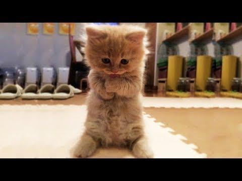 Jätte söta och roliga filmklipp på katter