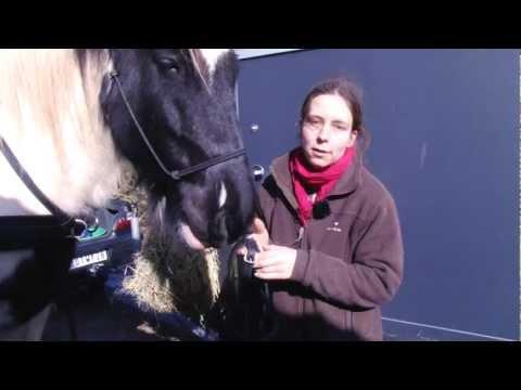 comment prendre la température d'un cheval