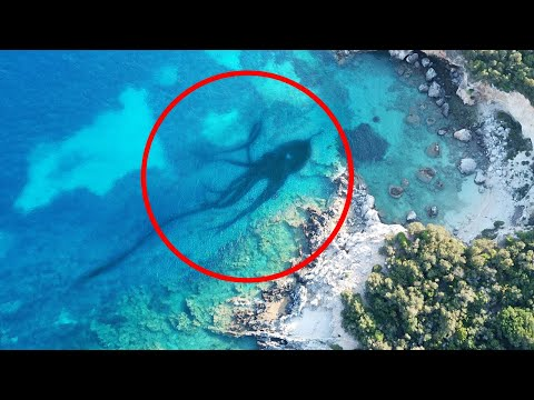 10 Scariest Creatures Spotted On Google Earth