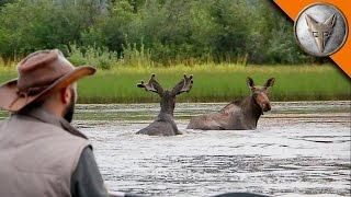 Brave Wilderness | Wild Moose Encounter!