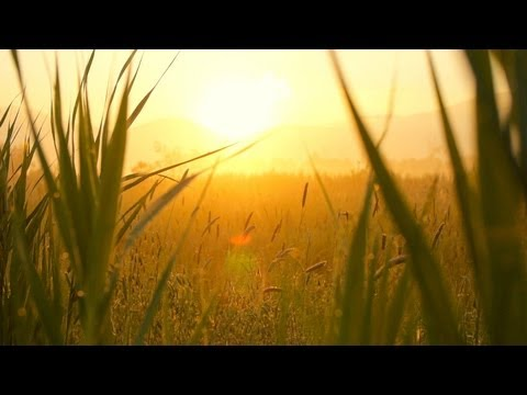 soft - Relaxing instrumental music: A slow, soft and peaceful music piece, for meditation or creative thinking, work, studying or doing your homework, or simply to ...