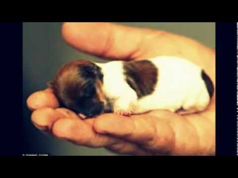 The World's smallest dogs!!!!!!