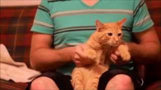 Chat qui danse - YouTube