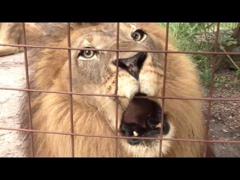 Big Cat Talk! - Roar, Purr, Meow