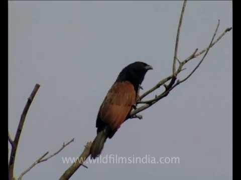 Uttarakhand About Uttarakhand Veethi