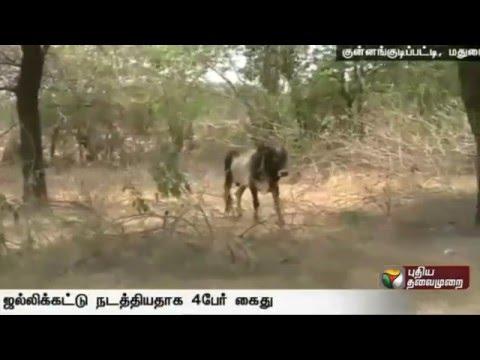Jallikattu-Issue--Four-person-arrested-at-madurai