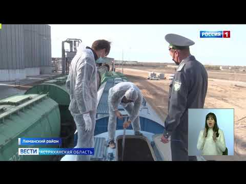 В Астраханской области Управлением Россельхознадзора проведен контроль ввезенной из Казахстана партии зерна для последующего экспорта в Иран