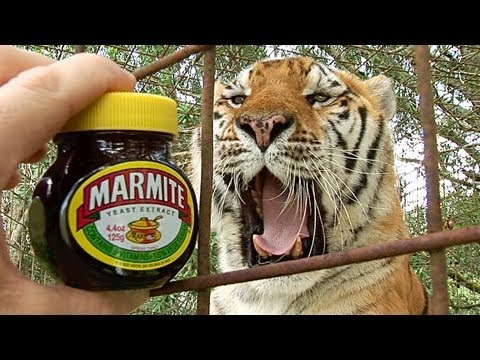 Do Tigers Like MARMITE