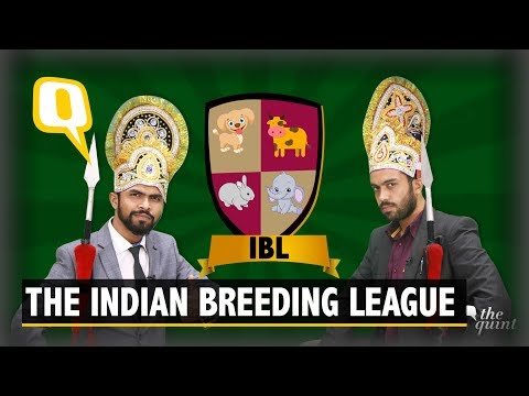 Indian Breeding League | Will Cows Be Man Of The Match Again?