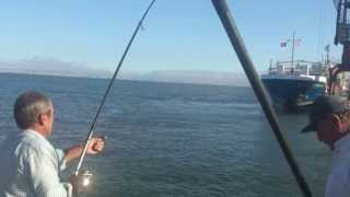 Video Corvina tirada no Poço Bispo 11-06-2013 MP3, 3GP, MP4, WEBM, AVI, FLV Desember 2017