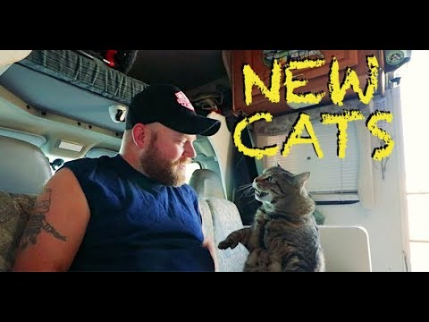 New Cats, New Sound System, & River Camping