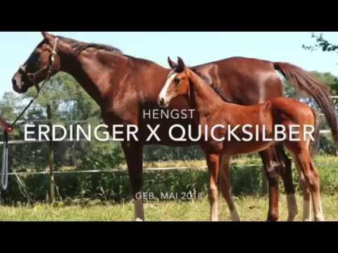 TRUDE with foal - trotting on pasturehttps://www.mense-bussmann-pferdezucht.de/fohlen/fohlen-2018/video-ed/