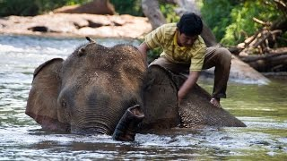 Sen Monorom Cambodia  city photos : Bathing elephants in Sen Monorom (Cambodia)