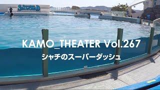 Vol.267~シャチのスーパーダッシュ~