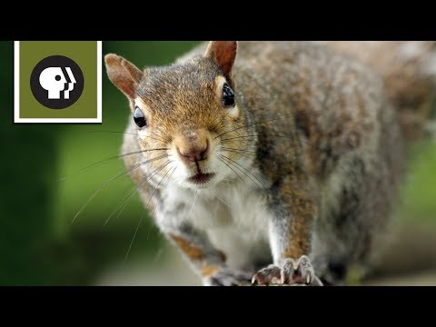 Squirrels Attempt Challenging Obstacle Course to Reach