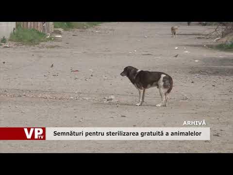 Semnături pentru sterilizarea gratuită a animalelor