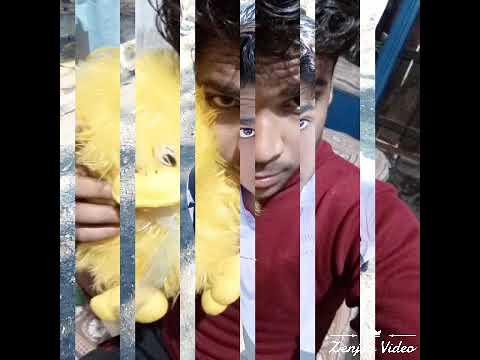 Video Svm bhuli nagar dhanbad 2016-2018 friends download in MP3, 3GP, MP4, WEBM, AVI, FLV January 2017