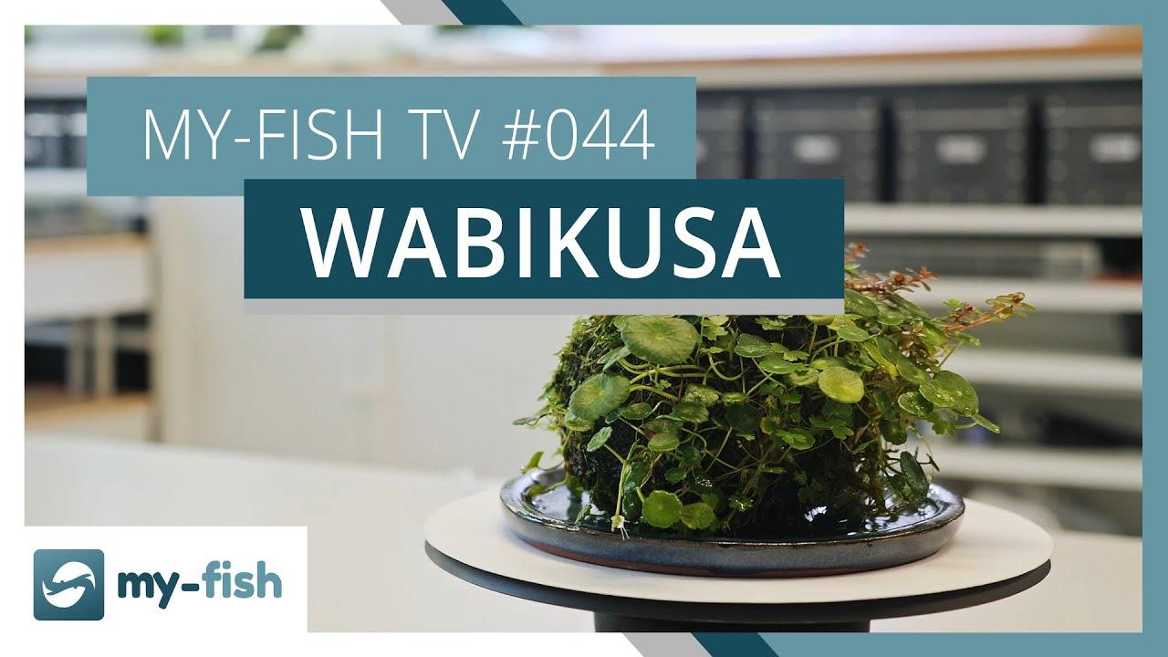 my-fish TV - Deine Nr. 1 Anlaufstelle für alle Themen rund um die Aquaristik 20